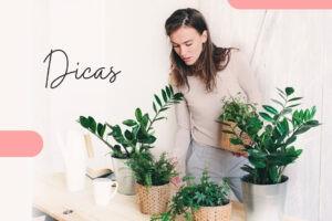 Dicas para você ter plantas em sua casa ou apartamento